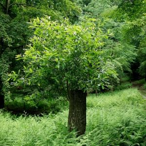 ヤマオヤジ・・・くつきの森「未来の森づくり」とモリアオガエル