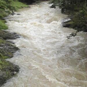 増水の針畑川・・・ヤブカンゾウとヌマトラノオ