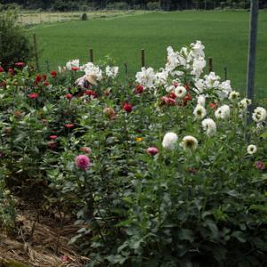 ミヤマクワガタとスミナガシ・・・夏の花、朽木戸谷・Mさんの農的庭