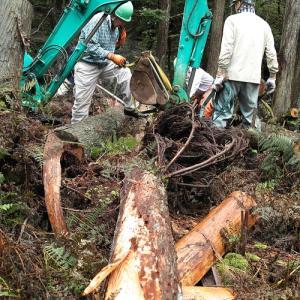 タマゴタケと百日紅・・・くつきの森、未来の森づくりと薪ネット例会