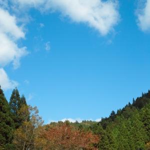 長崎くんちの花御礼・・・周囲の紅葉も秋本番!
