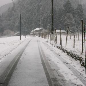 小雪・・・冬の訪問者