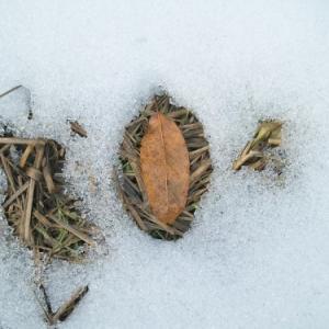 雪の下・・・鎌倉名物・鳩サブレ