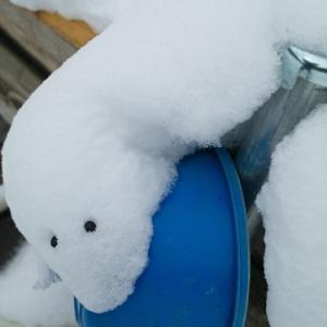 寒の水で手前味噌を・・・ご人、寒中でござる!