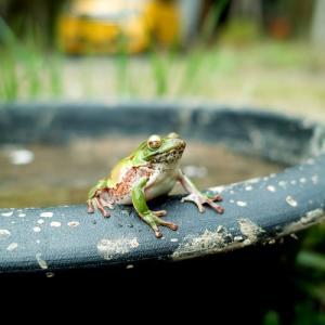 カエルの学校、籾まきと苗床つくり・・・新緑とヤマザクラの奥山渓谷