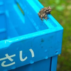 カエルの学校、苗床・・・オクヤマガーデンの花