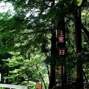 温度計33℃の表示・・・ライン張りと重度の飛蚊症!