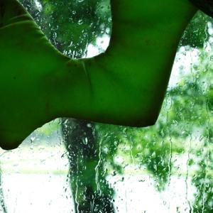 クリの花と梅雨入り・・・朽木西小学校の地域訪問