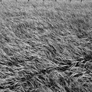 自然カモ農法・・・雲と青ゾラと飛行機