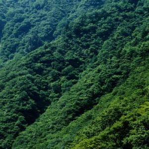 米坂線(11) キハ52