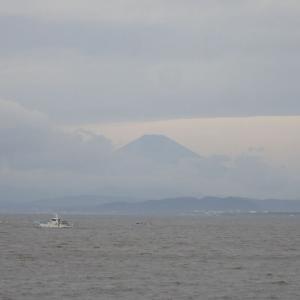 久しぶりの青空!葉山でアオバトに遭遇~写真撮れなかったけど