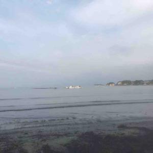 今朝も軽く海散歩 お昼はゼロくんと裏山ランチ♪