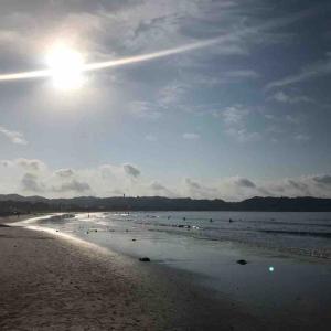 今朝も葉山で海中散歩♪ クラゲに刺されたけどハタタテダイに遭遇♪