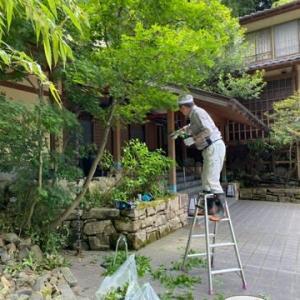庭園剪定3日目・明日ランチクルージング1班出港・辛坊さん帰路へ出港