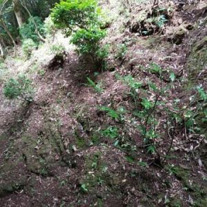 湯楽庭園剪定山刈り清掃作業最終日