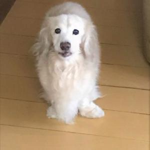 今日のまるさん(愛犬)