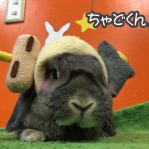 つめ切りうさちゃん【138】& 帽子がいっぱーい の巻♪