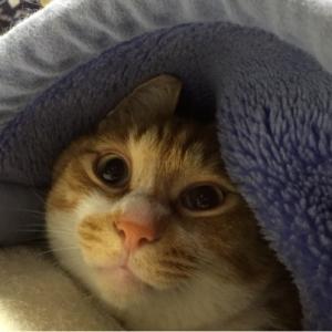 冬眠ちゅう…??