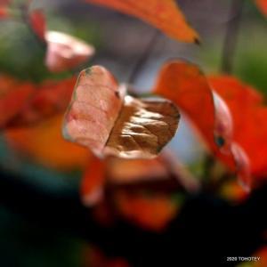 秋深まる 07