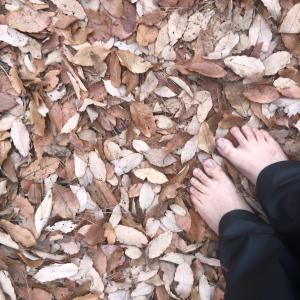 裸足で歩いてみました〜アーシング♪