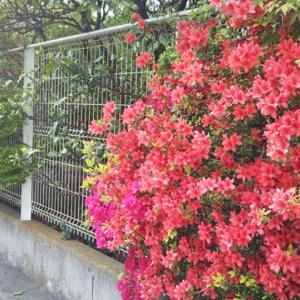Seijo Today…Beautiful season
