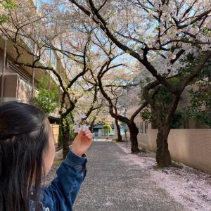 お花見散歩、日吉~自宅を歩いて発見