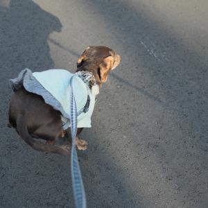 コロナ禍で身に染みた、犬と暮らす生活の重要性。
