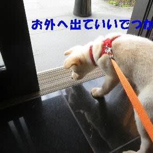 お散歩デビューで石食った!!
