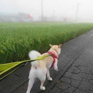朝昼夕、お庫裏さんとお散歩