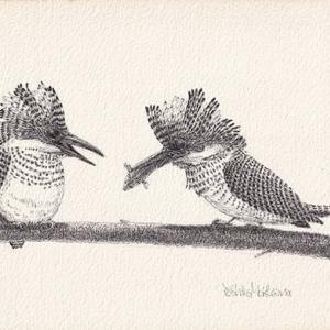 野鳥イラストPart1