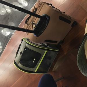 オマーンから日本へ〜 コロナの渦中、犬を飛行機に乗せて帰る 2 スポキール空港編