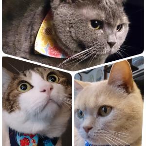 ハンドメイドマルシェ横浜で猫さんのバンダナを買う