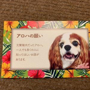 アロハの願いカード