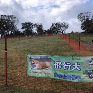 マウントジーンズ那須での飛行犬撮影会を開催中!