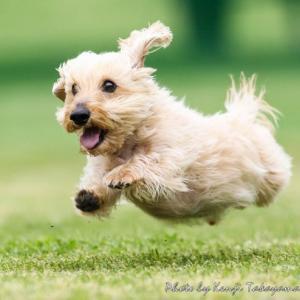 10/26(土)は世界の名犬牧場で飛行犬撮影会を開催します
