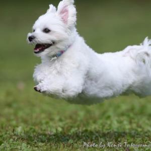 10/27(日)『ドッグランひぬま』飛行犬撮影会を開催いたします。