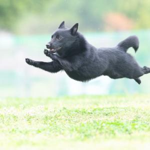 今週末の飛行犬撮影会は大丈夫そうですよ~\(^o^)/