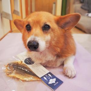 我が家の愛犬レオくん、14歳のお誕生日はウマウマがいっぱい(*^-^*)