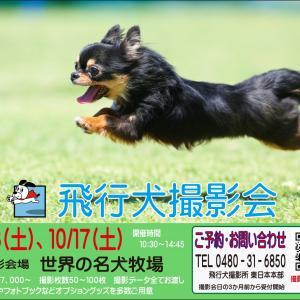 5/23(土)世界の名犬牧場・5/24(日)ドッグランひぬま 飛行犬撮影会中止のお知らせ