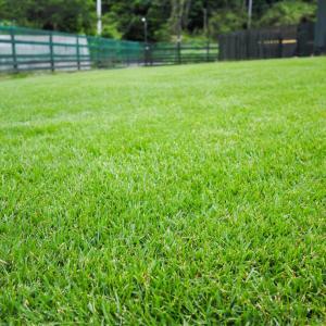 栃木の飛行犬撮影所の芝生が良い感じです\(^o^)/
