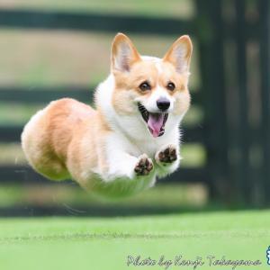 2020/6/21 栃木飛行犬撮影所に来てくれたハコちゃんをご紹介