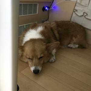 スマホやタブレットで家電を操作できる「スマートリモコン」の導入で愛犬のお留守番時の安心感アップ!