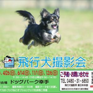 キャンセル枠出ました! 10/31・11/1 ドッグパーク幸手 飛行犬撮影会