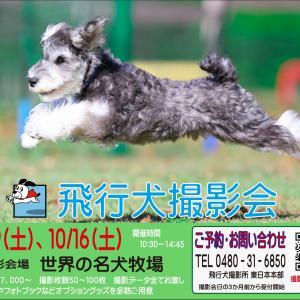 5/29(土)『世界の名犬牧場』飛行犬撮影会を開催いたします。