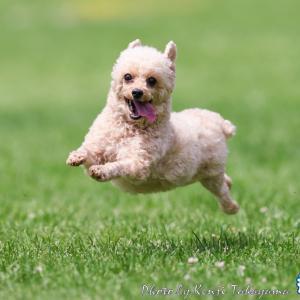 2021/5/29 「世界の名犬牧場」で開催した飛行犬撮影会に来てくれたわんこ達