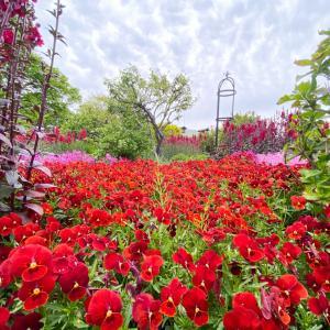 色とりどりのお花が咲き誇るめちゃくちゃ綺麗な公園だった~『くじゅう花公園』