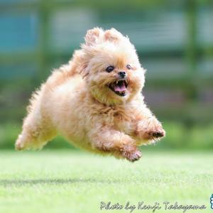 2021/9/7 栃木の飛行犬撮影所に来てくれた、ちっぺちゃんをご紹介します
