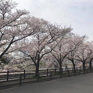花見シーズン