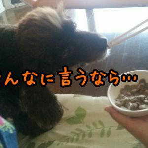 病気を患う犬との暮らし