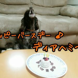 10歳のお誕生日!おめでとう!ありがとう!